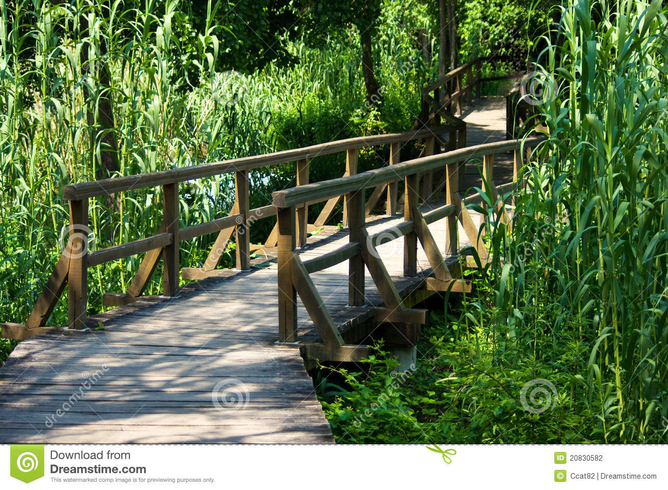 wooden footbridge stock photo image of natural tree 20830582