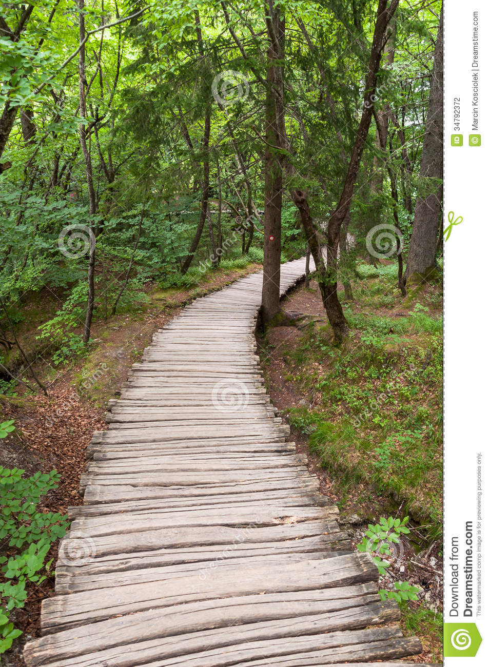 Backyard Forest Management : Wooden footpath in a forest, Plitvice Lakes National Park