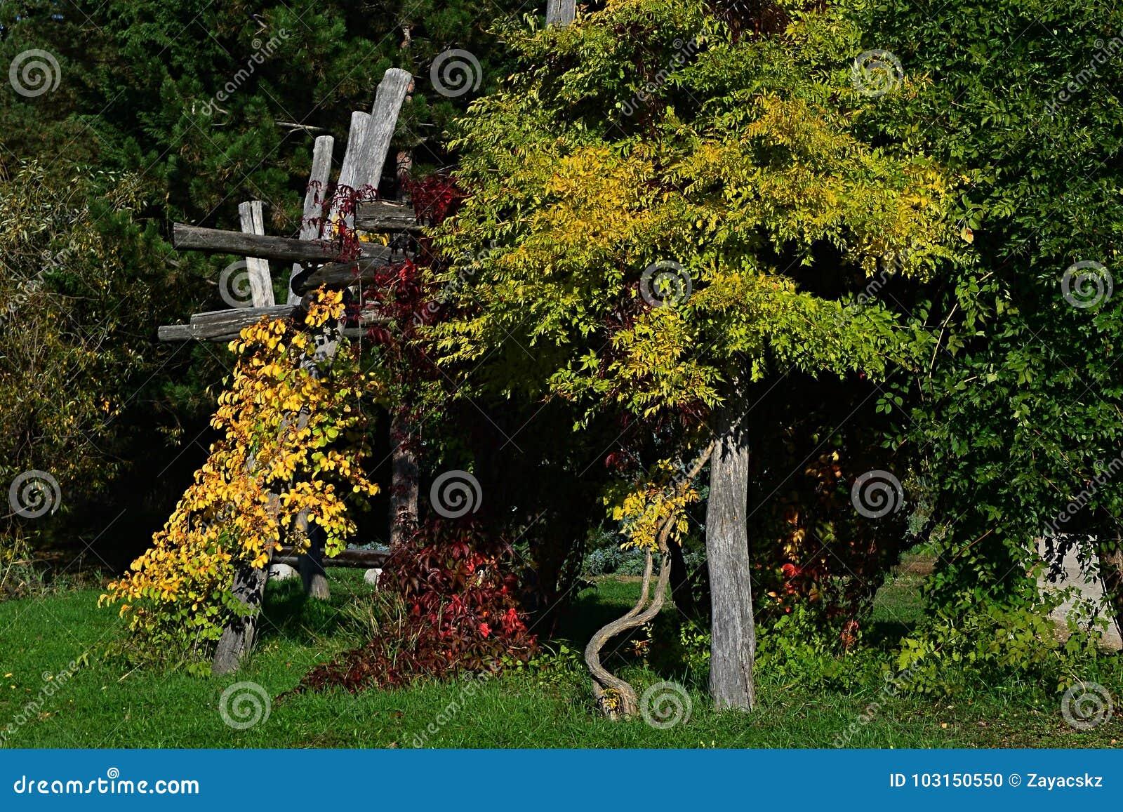 Construction of a pergola: vegetation