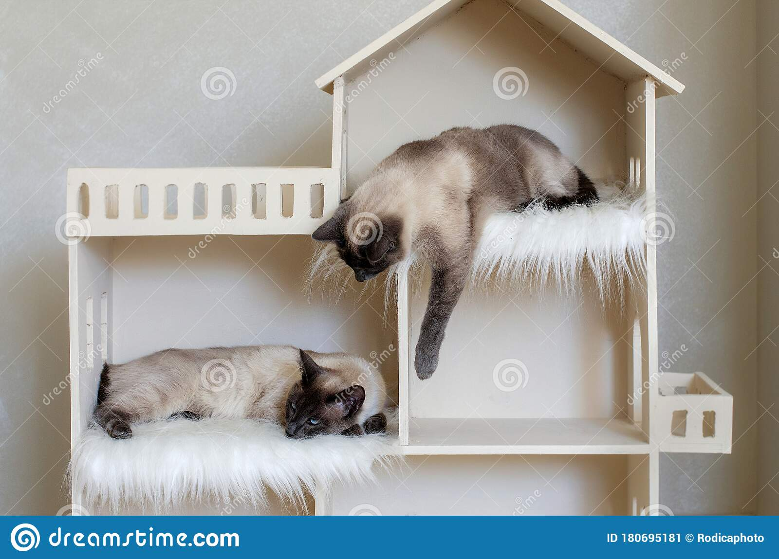 Two Domestic Short Haired Cat Brothers In Cat House Domestic Cat Twins Stock Image Image Of Friendliness Hissy 180695181