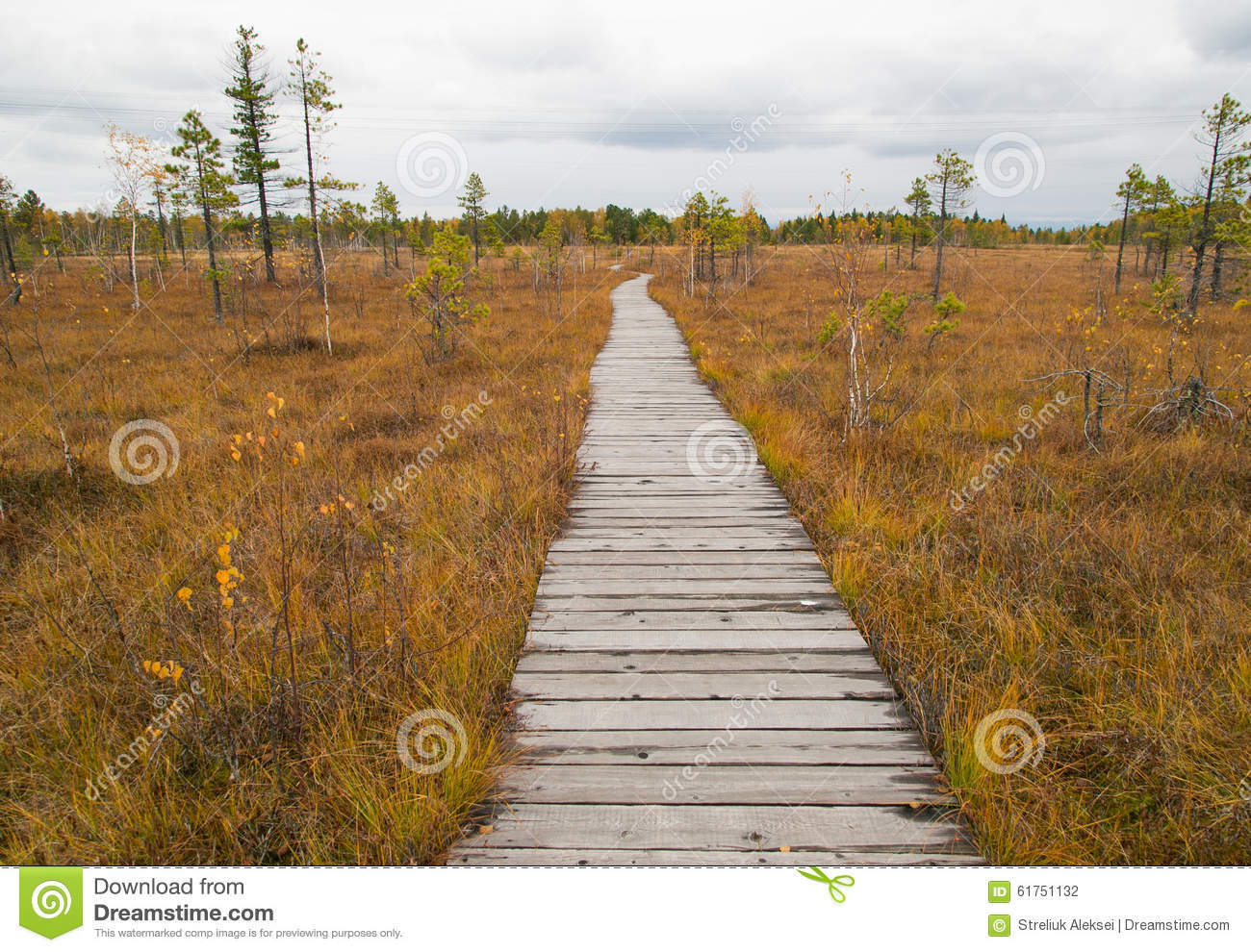 Wooden Path Running Through The Swamp Stock Photo - Image ...