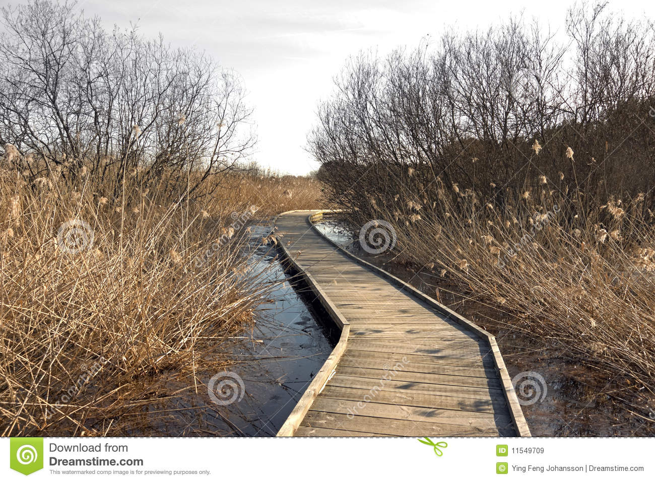 wooden pathway royalty free stock images image 11549709