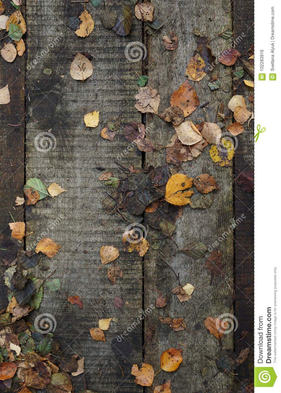 Wooden pathway with dry autumn leaves background
