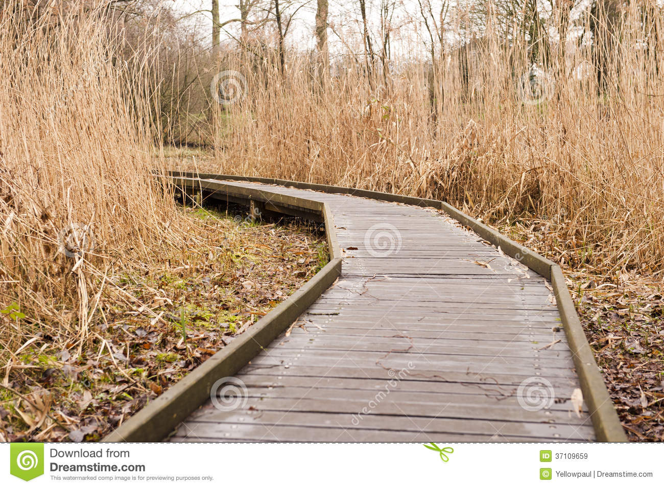 wooden pathway through grass landscape royalty free stock