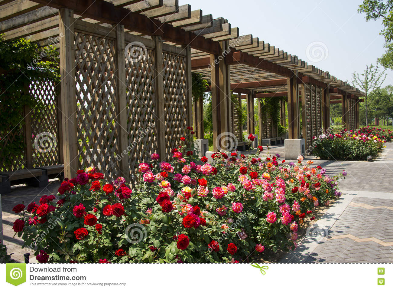 Wooden Pavilion,,Flowers In Clusters,chinese Rose, Stock Photo ...