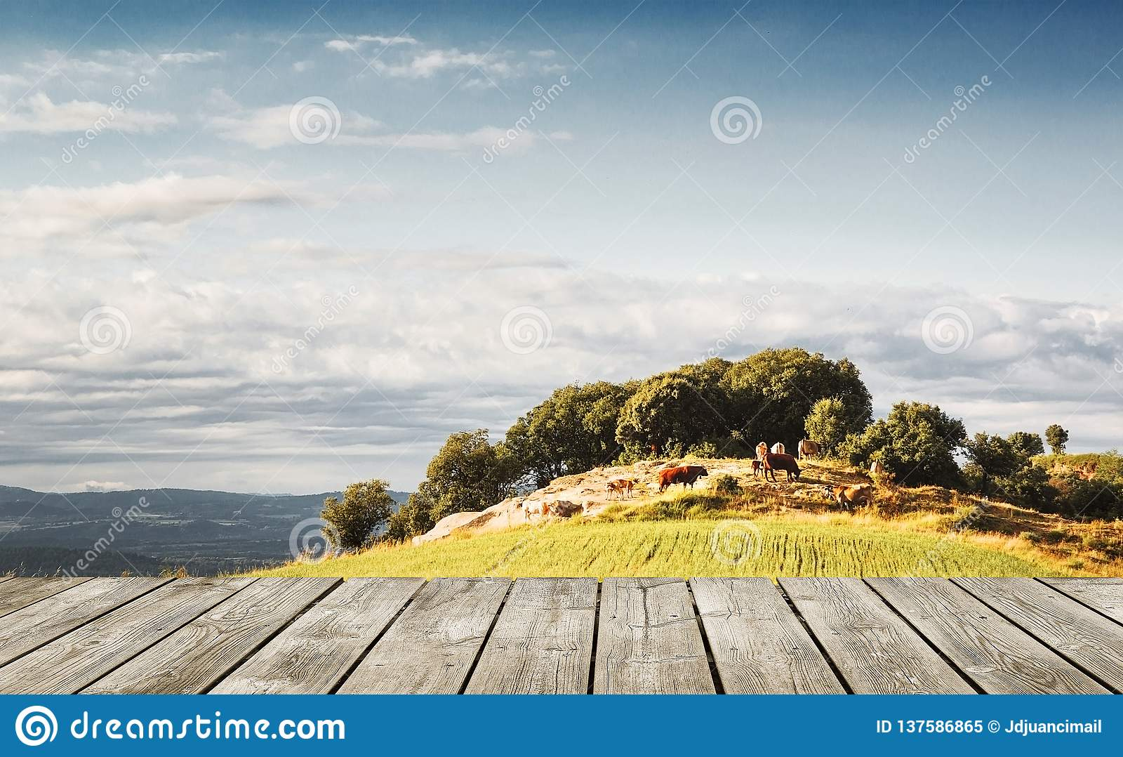 Wooden plank table against a natural farming background in the nature. Empty copy space