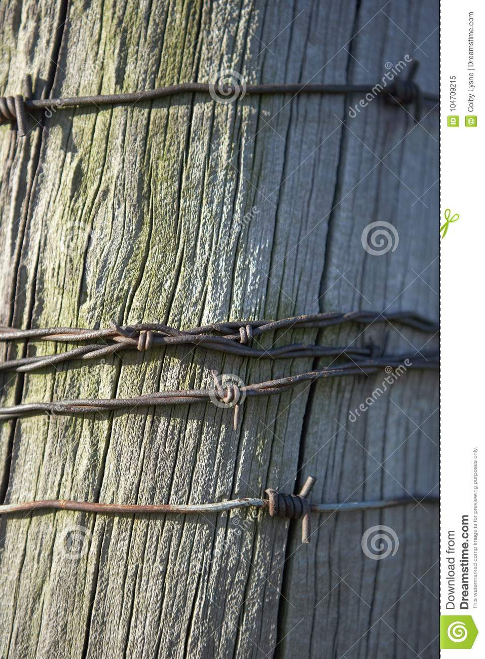 Wooden pole with barbed wire in close up view