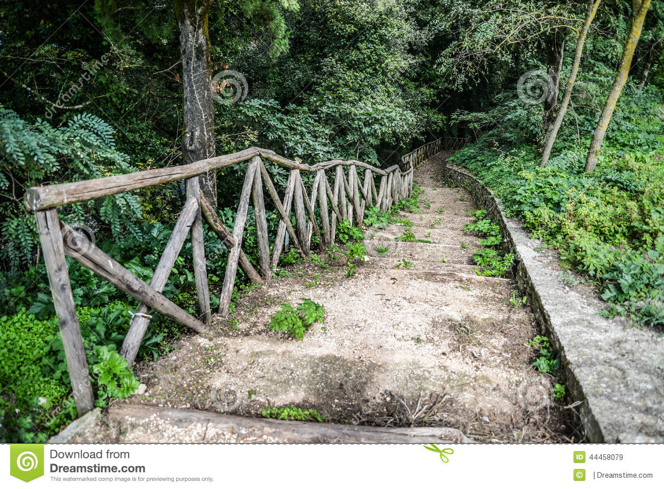 Wooden stairs / path through the forest