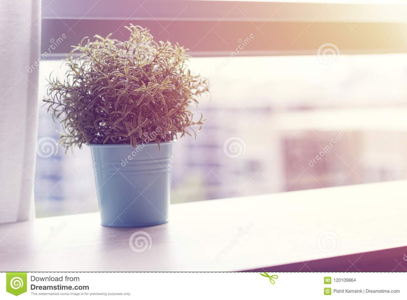Wooden table with small green plant in pots on window
