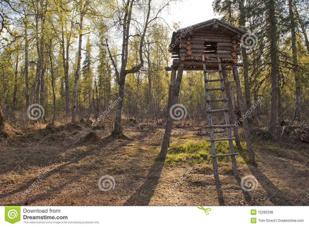 Hunting Cabin Plans Wooden Tree Fort Stock Photo Image Of Raised Nature