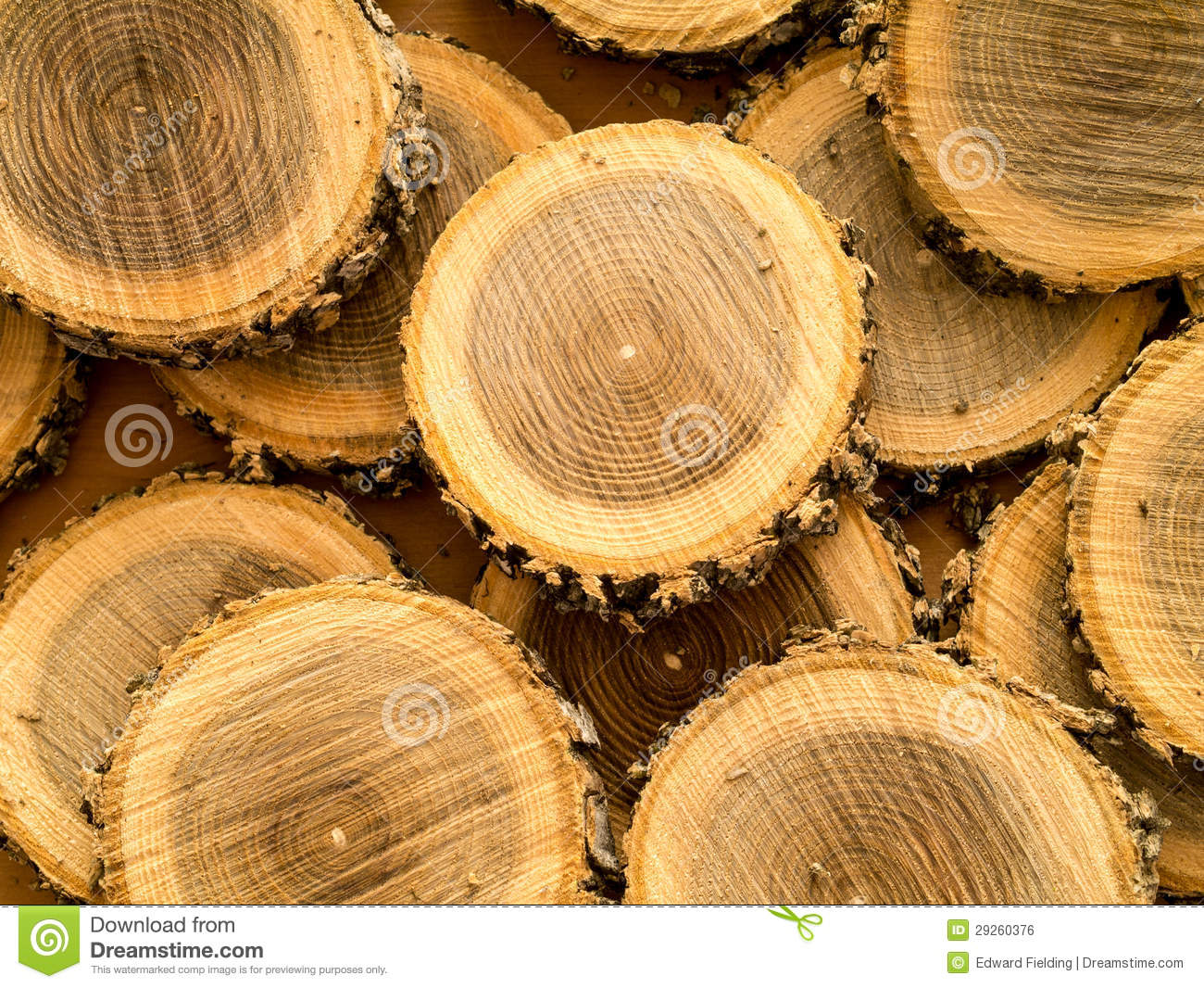 Wooden Tree Log background stock photo. Image of texture