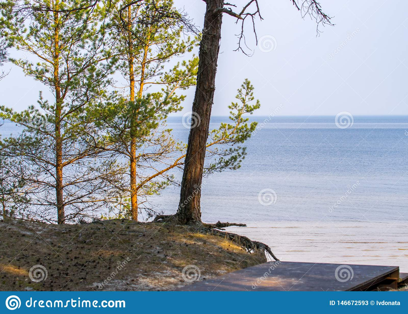 Wooden walkway leading to the sea through a pine forest