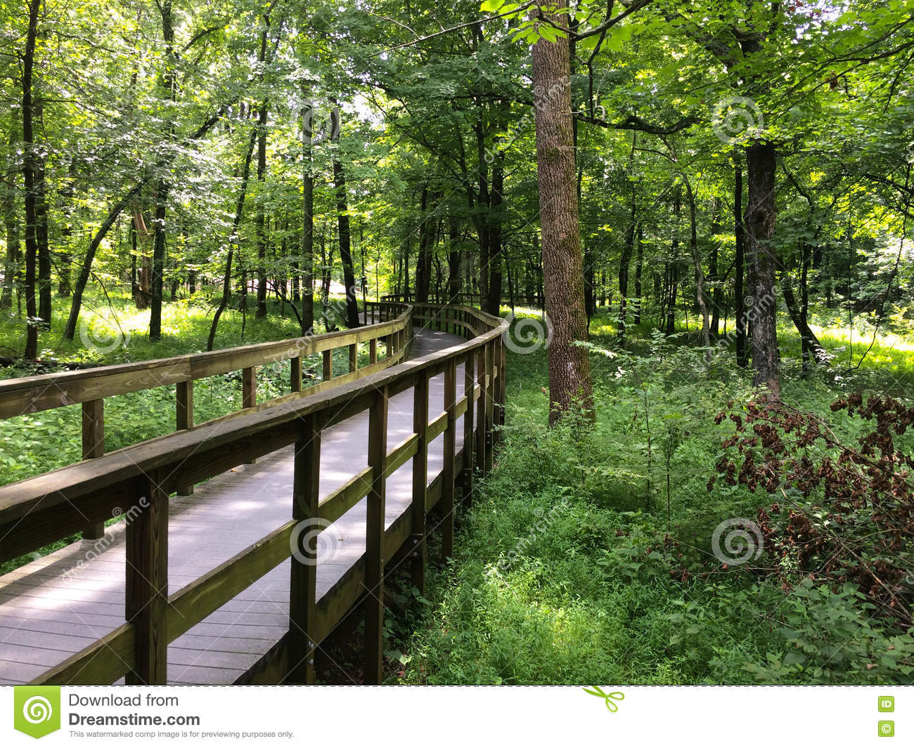 Wooden Walkway in Mammoth Cave National Park