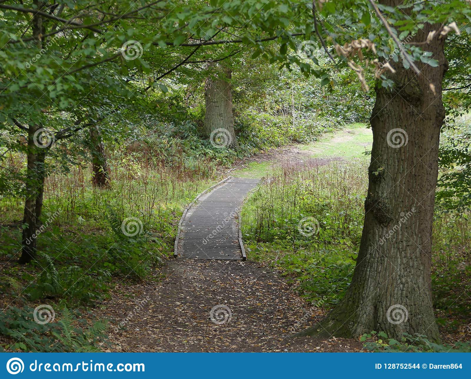 A Wooden Walkway Through The Trees Brown Leaves Scatter The Gr