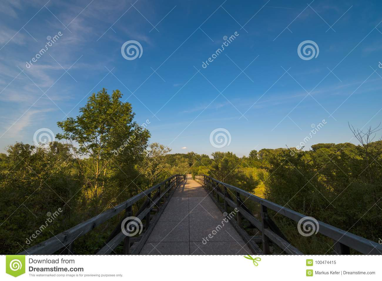 Woodenbridge Over A Pond In The Lobau Stock Image Image Of Wooden