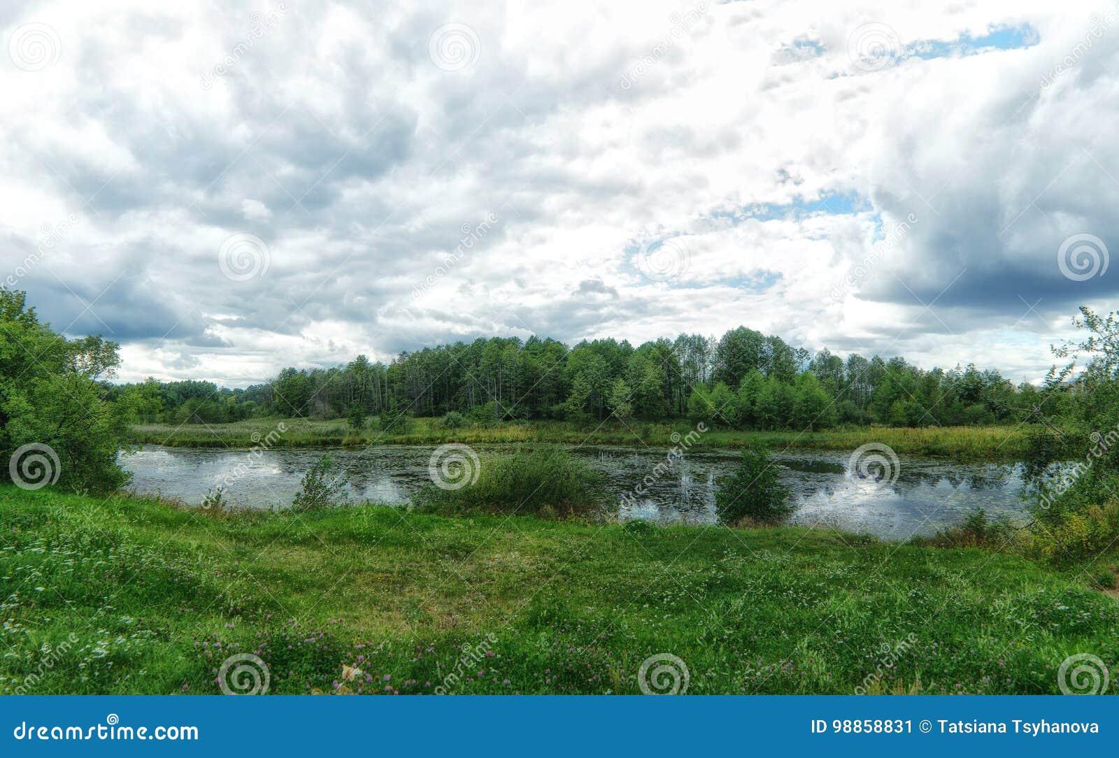 Woodland bog. Clouds sky. Green landscape. Colorful trees.