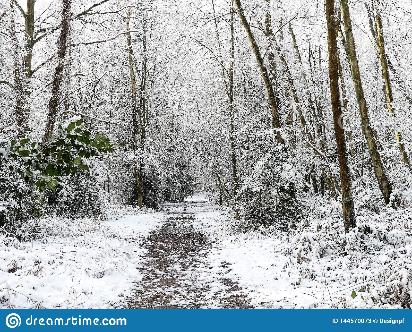 Woodland footpath in winter snow, Chorleywood Common, Hertfordshire