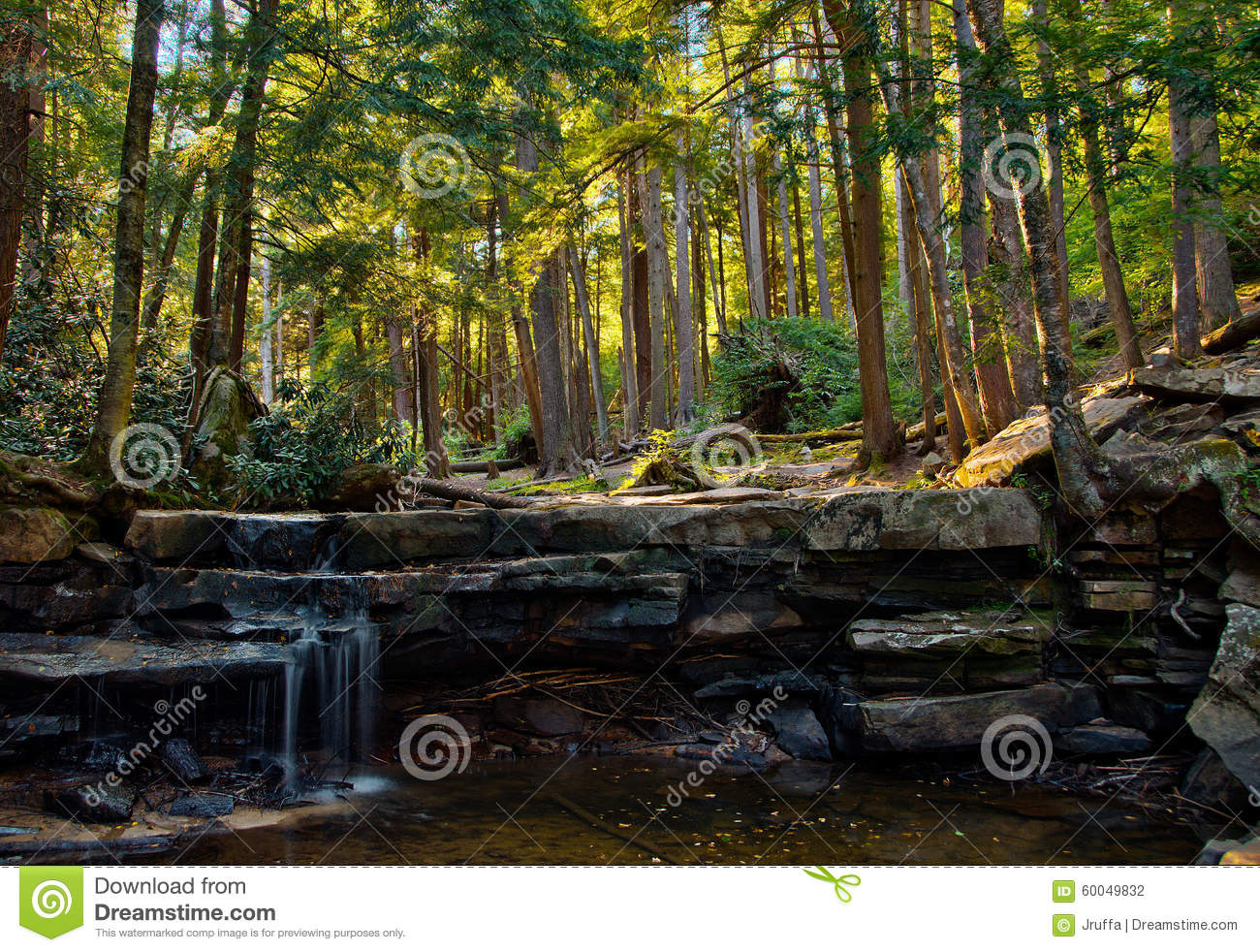 Woodland landscape in Swallow Falls State Park, Maryland