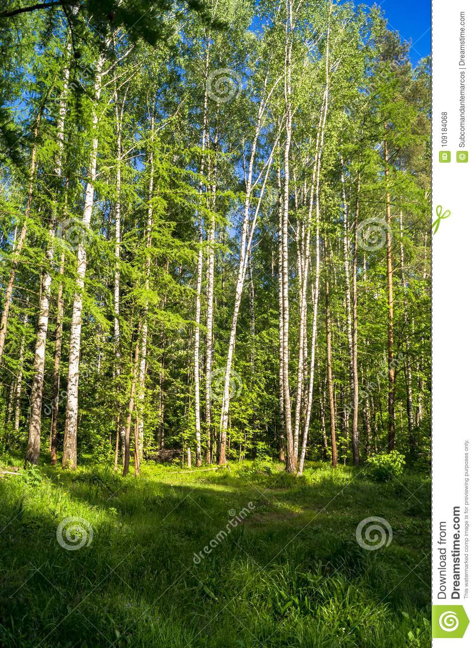 Vibrant summer landscape. Mixed forest on the sunny day.