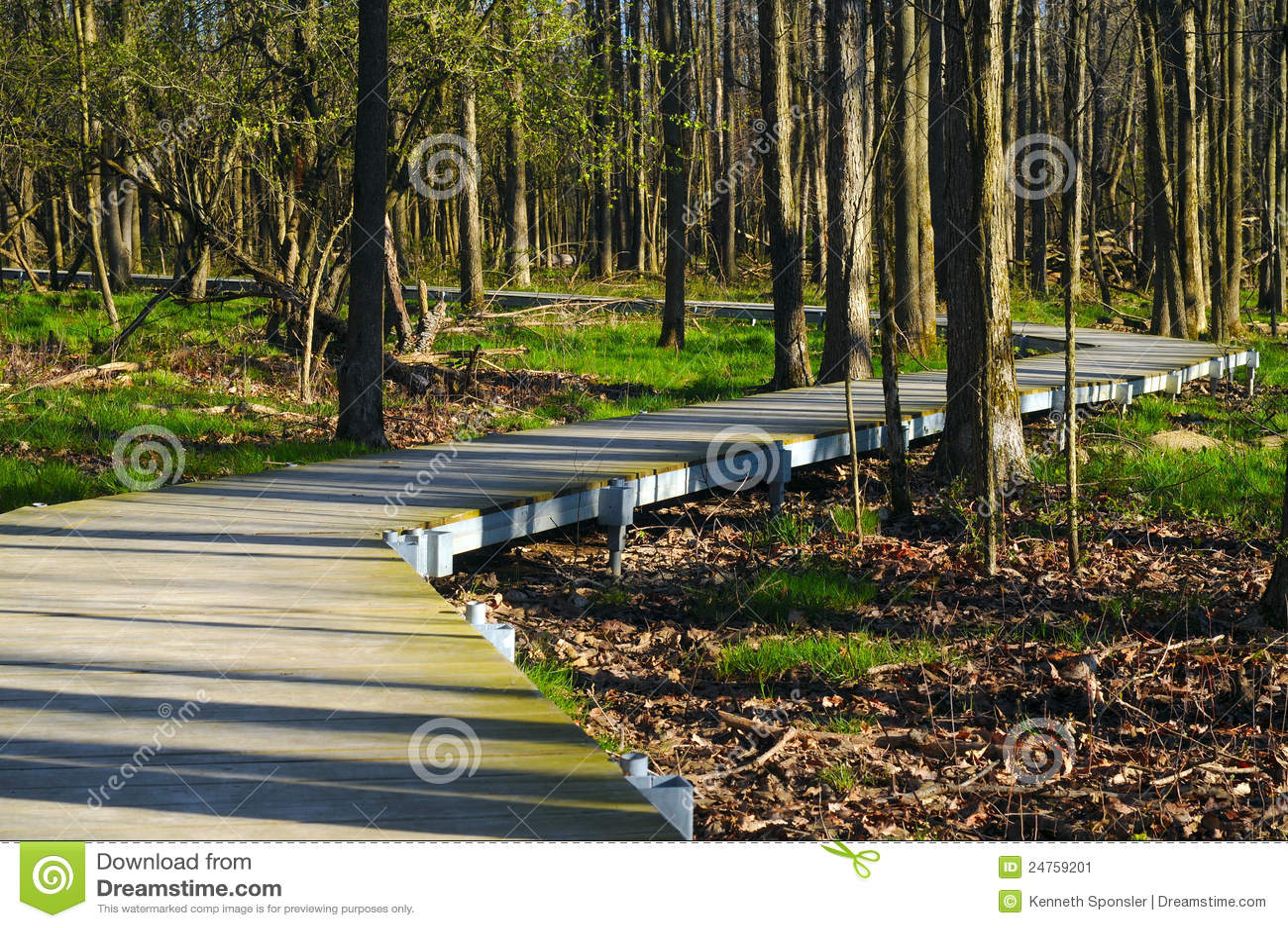Woodlands boardwalk