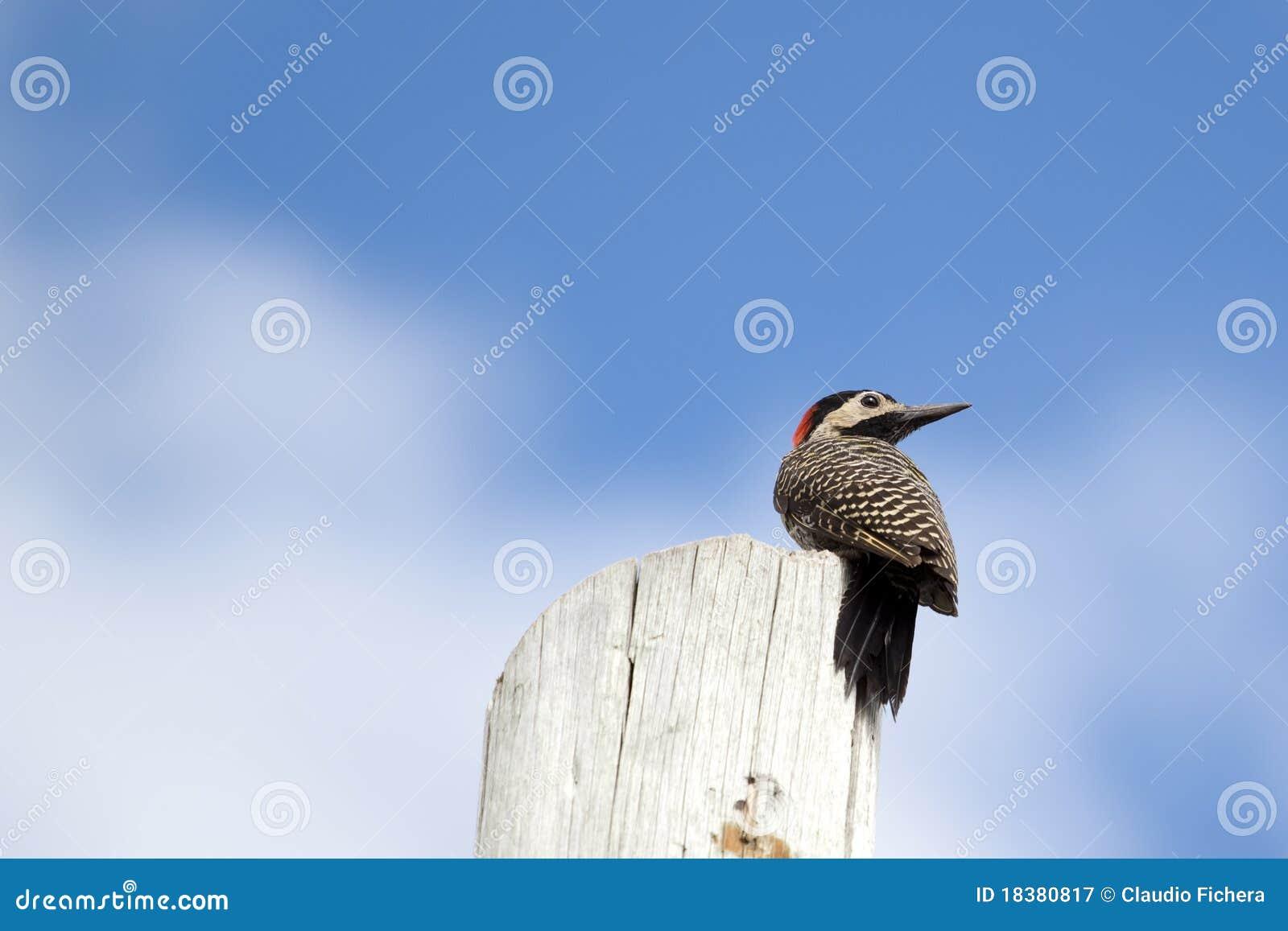 Woodpecker вала
