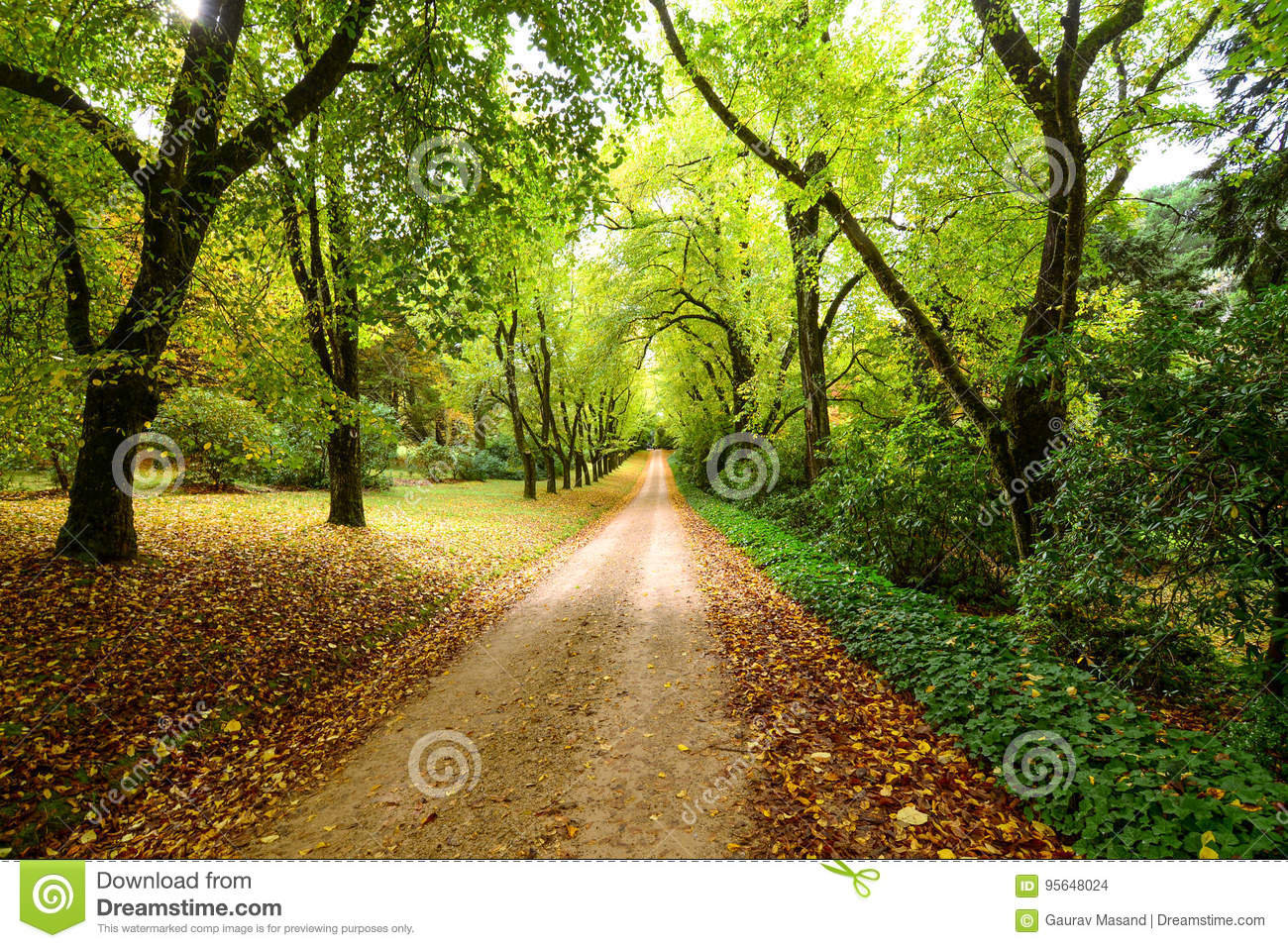 Download Woods stock photo. Image of branches, scene, nature, auburn - 95648024