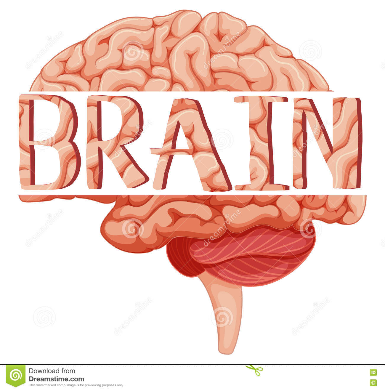Word brain on human brain stock vector. Illustration of clipping ...