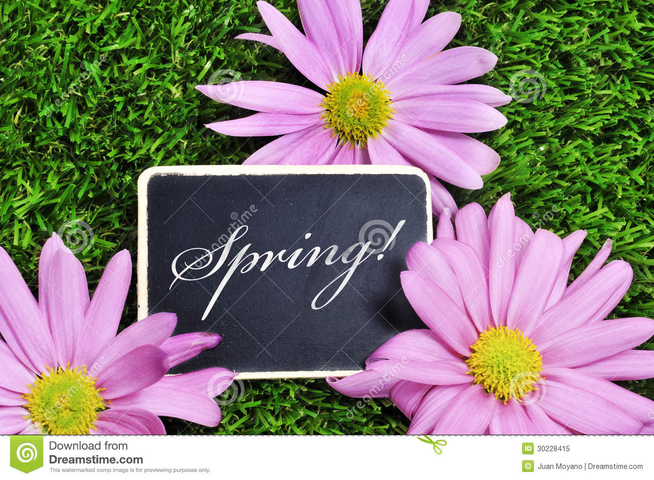 spring stock image  image of decorative  garden