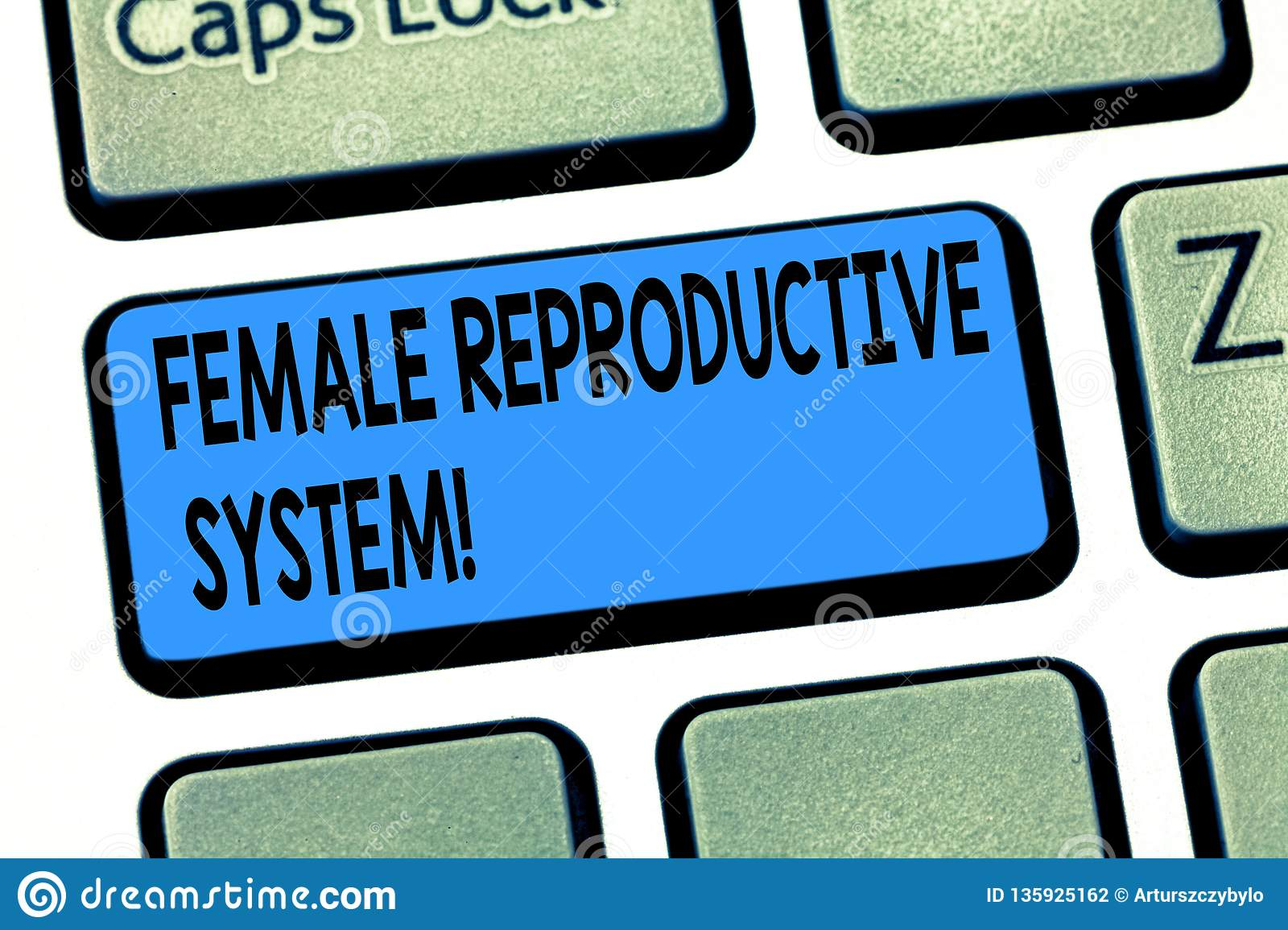 Word writing text Female Reproductive System. Business concept for responsible in reproduction of new offspring Keyboard