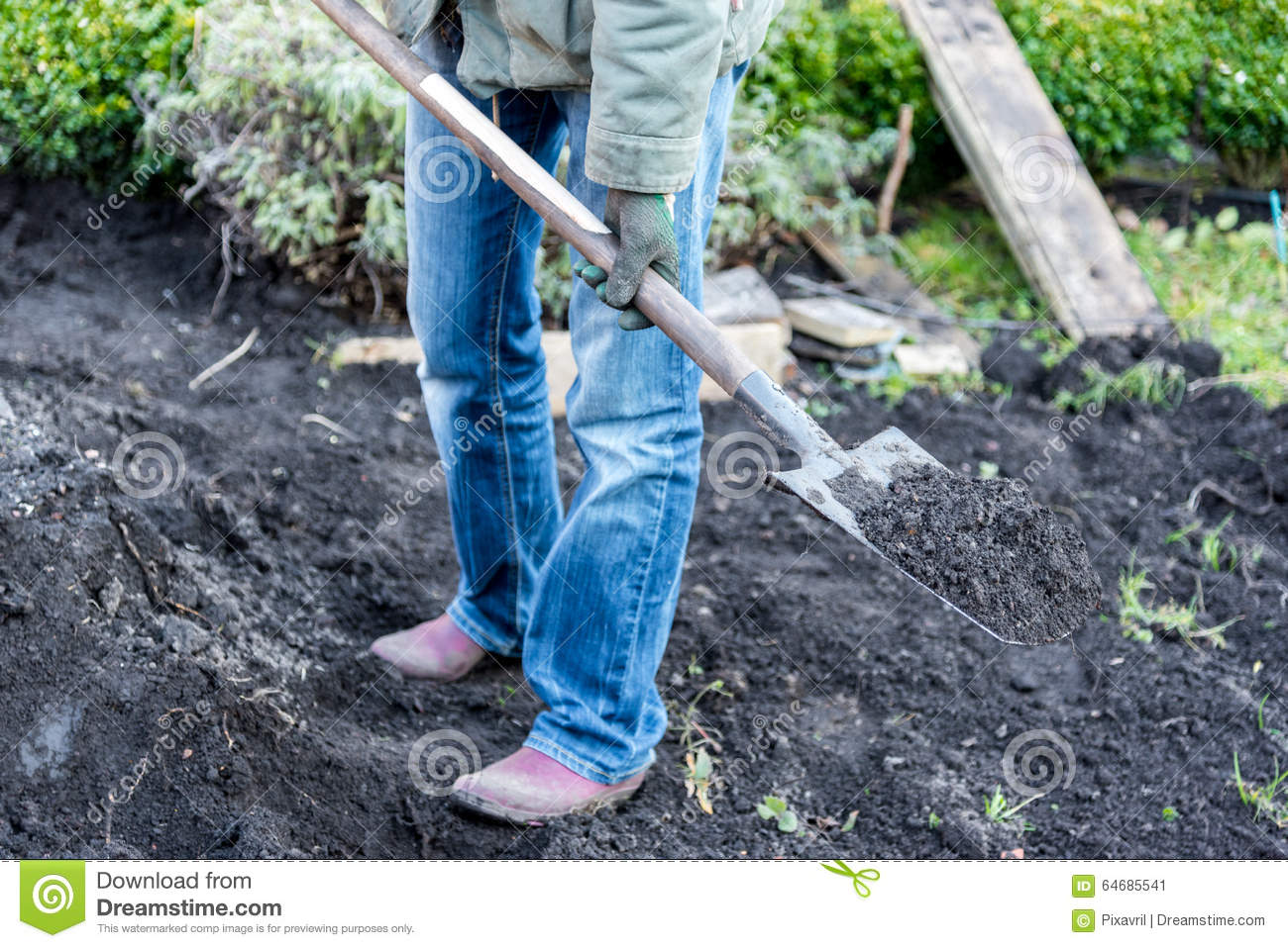 Work in the garden stock image image of preparing preparation 64685541 - Gardening works in october winter preparations ...
