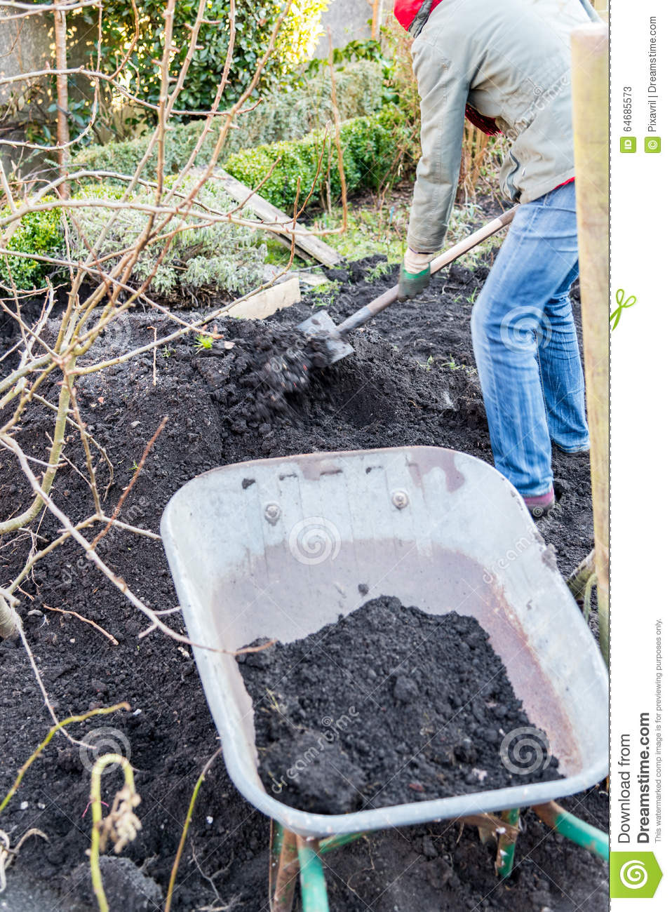 Work in the garden stock photo image 64685573 - Gardening works in october winter preparations ...
