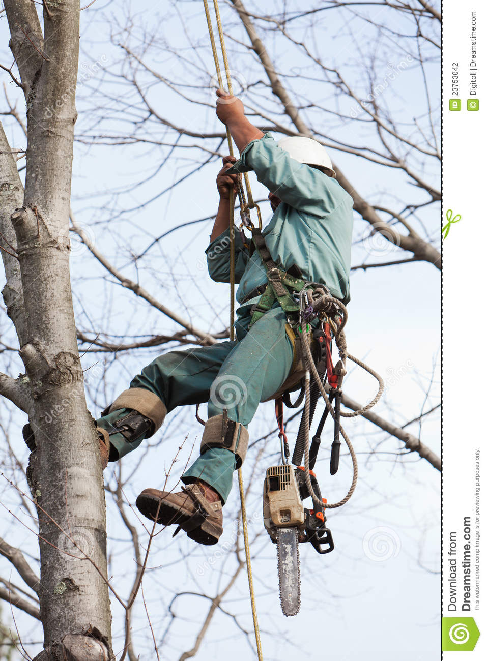 Worker being Hoisted up into a Tree