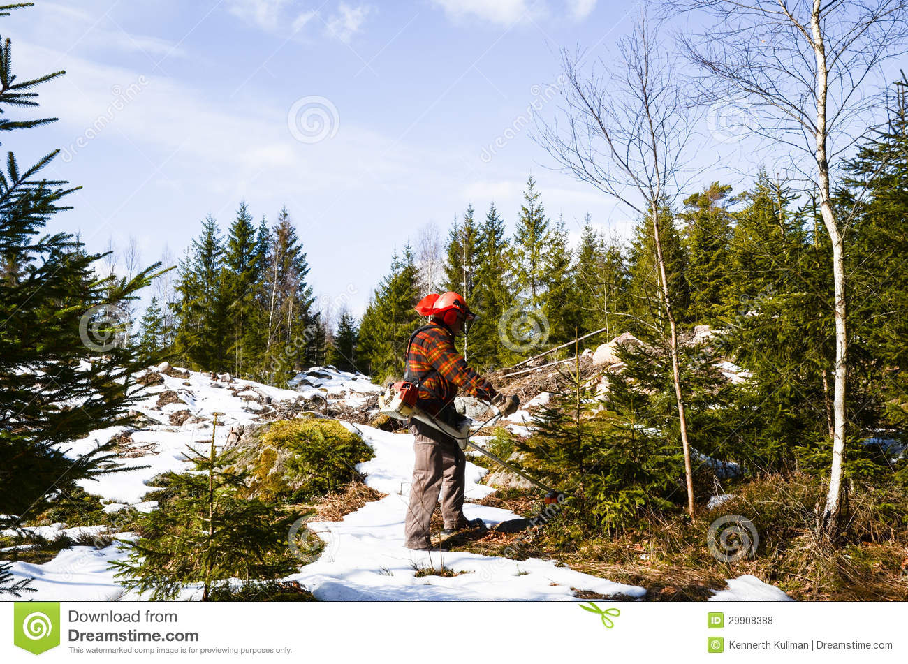Worker with brush cutter stock photo  Image of birch - 29908388