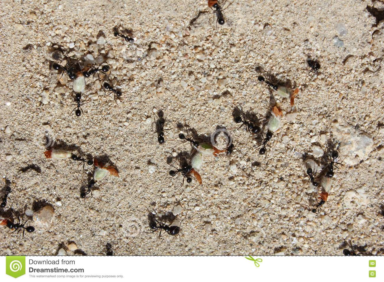 Working ants - photo#13