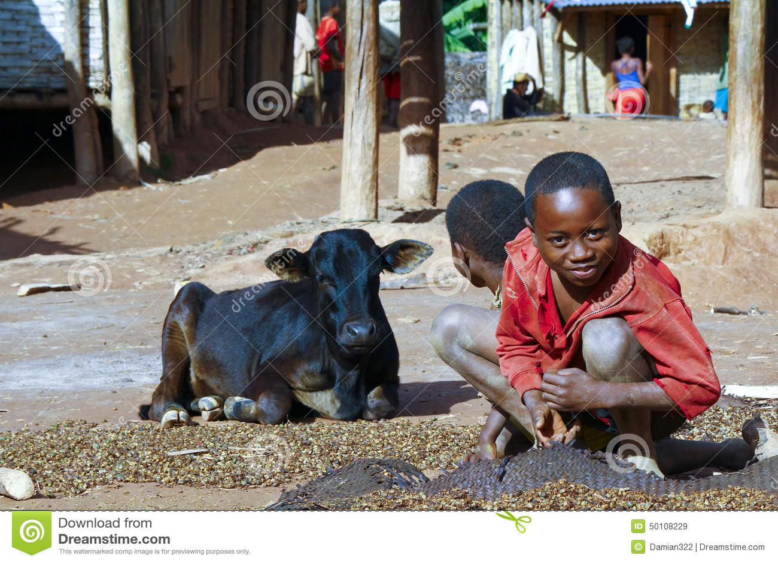 Working poor african children and cow  Madagascar Poor Children Working