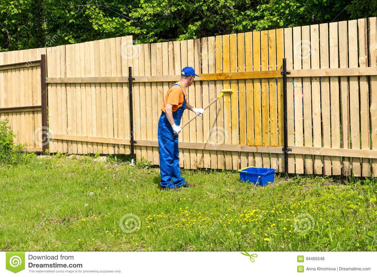 Workman Paints Wooden Fence With A Paint Roller Stock Photo Image