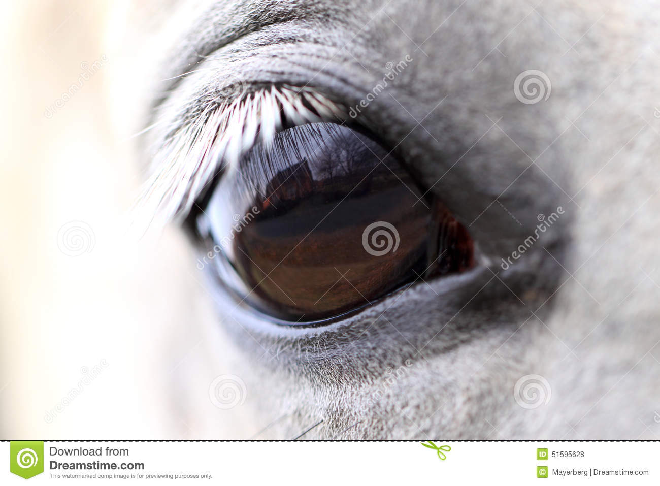 World Through The Horse Eyes Stock Photo Image Of Face Young 51595628