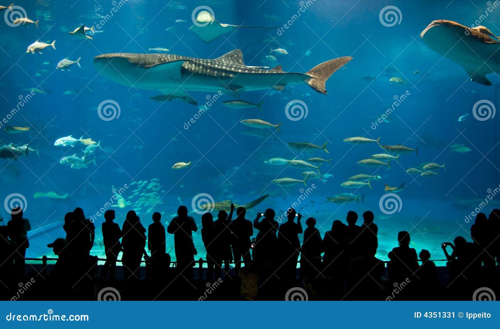 Worlds Largest Acrylic Aquarium Stock Image - Image: 4351331
