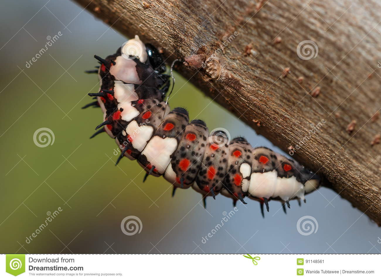 The worm,caterpillar, a worm on a tree.