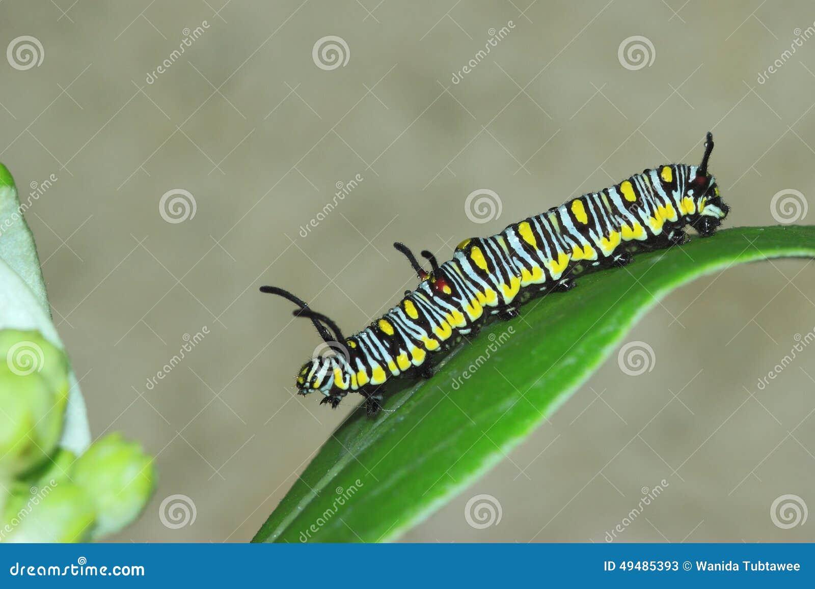 Worm pattern