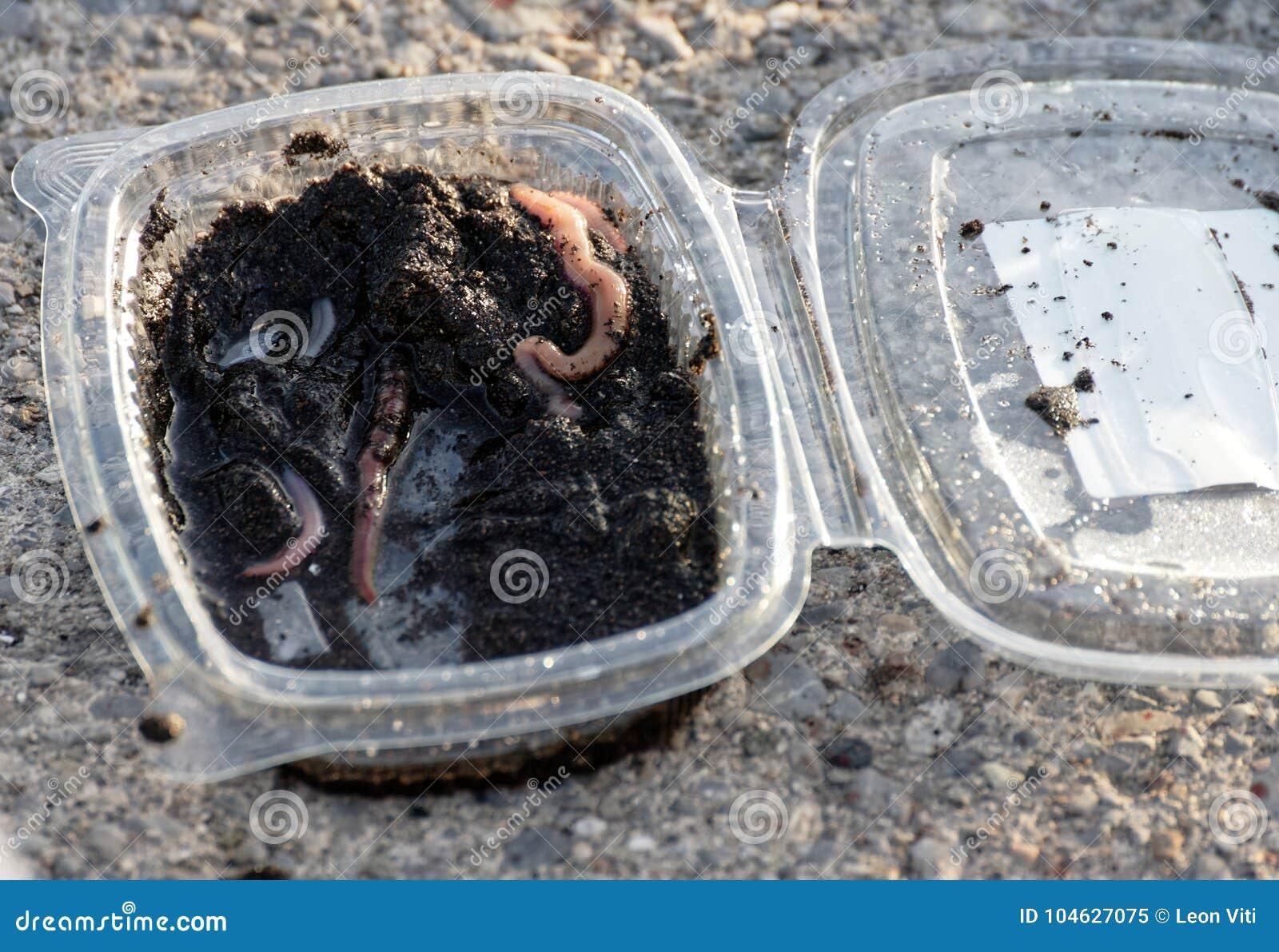 Download Worm Voor Visserij Geroepen Americano Stock Afbeelding - Afbeelding bestaande uit squirm, invertebrate: 104627075