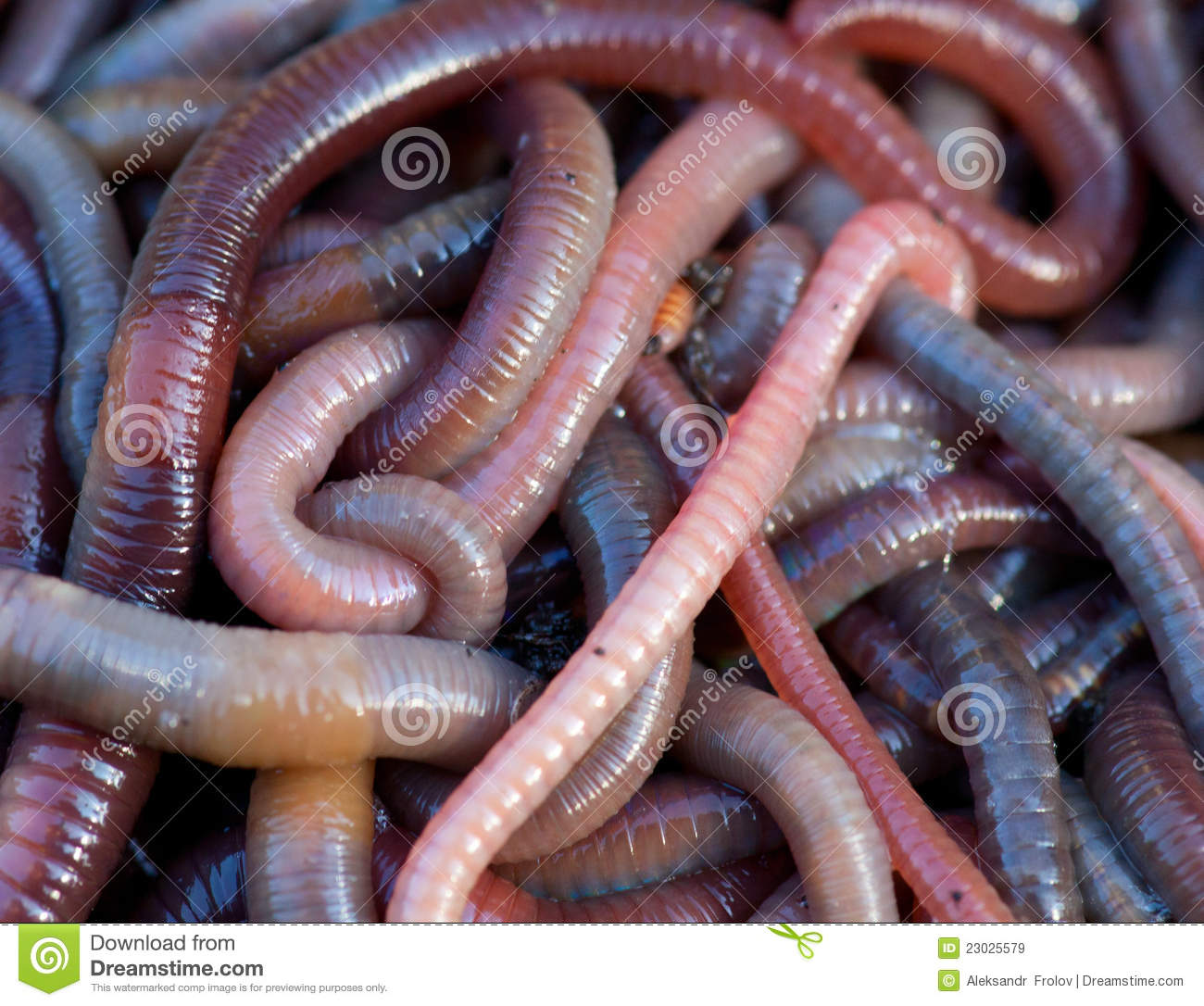 Kw Worms