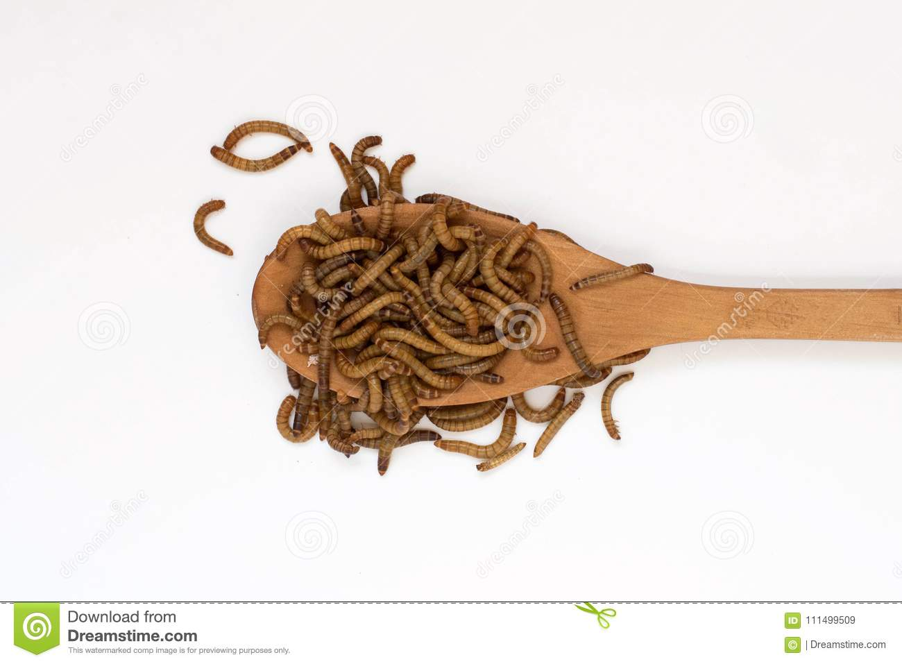 Worms, Meal Worms On Wooden Spoon On White Background  Larvae Of The
