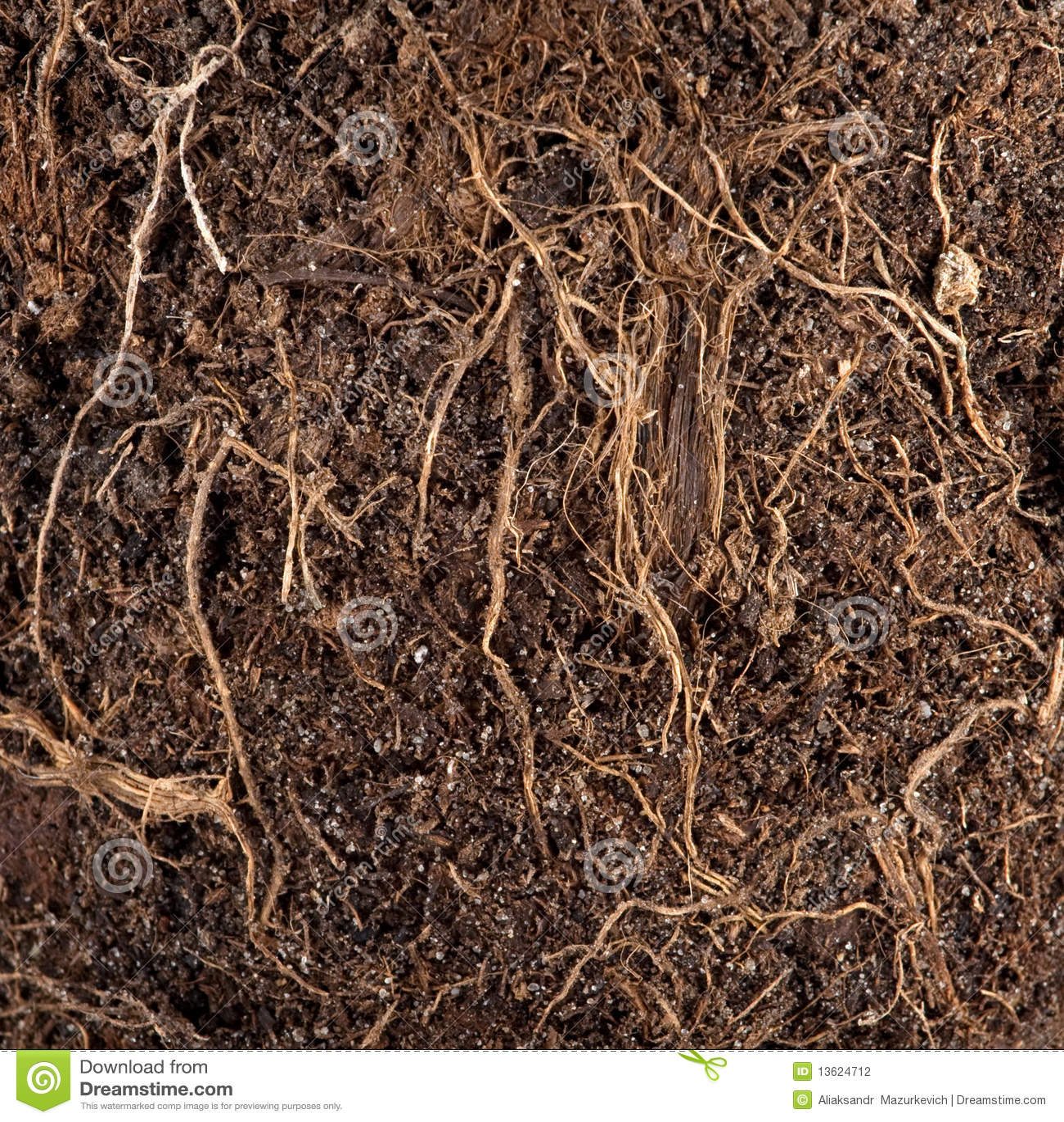 Wortels in een grond stock fotografie afbeelding 13624712 - Een stuk grond ontwikkelen ...