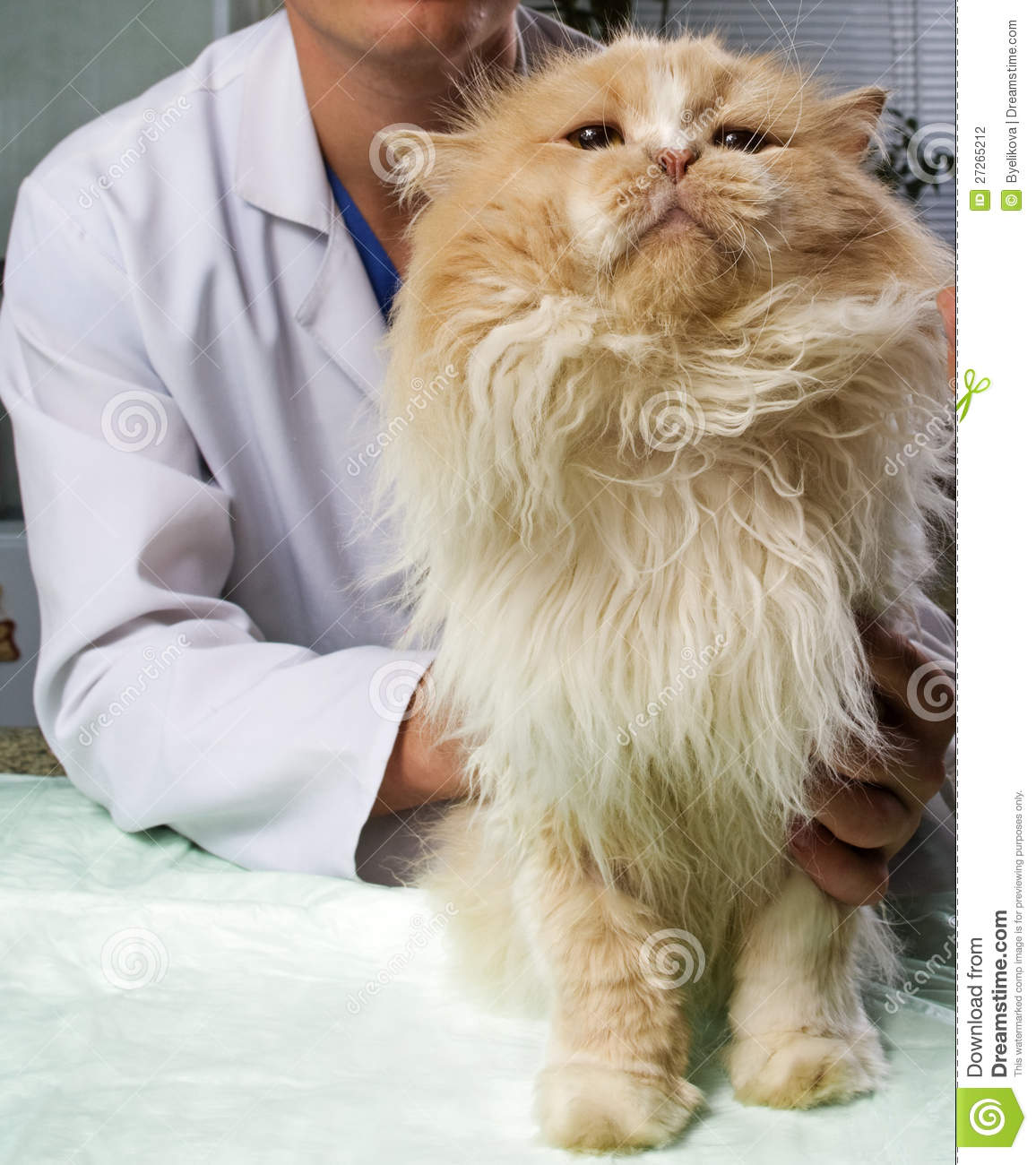 Wounded cat treated