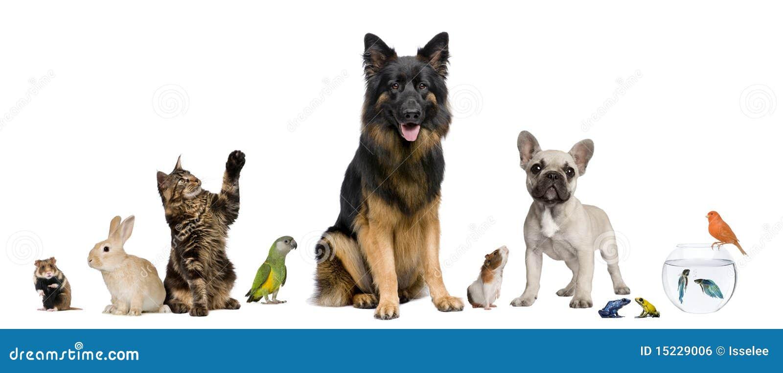 Wpólnie grupowi zwierzęta domowe