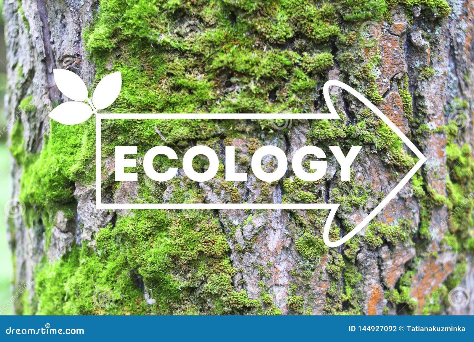 Wpisowa ekologia na strza?kowatym drzewnej barkentyny tle poj?cie ekologia Naturalny sztandar