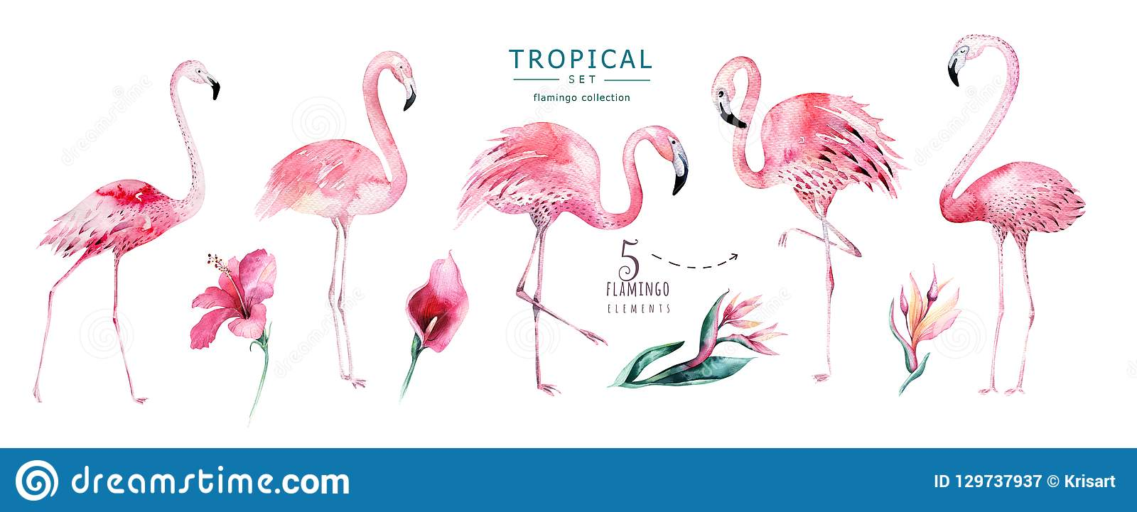 Wręcza patroszonej akwareli tropikalnych ptaki ustawiających flaming Egzot różane ptasie ilustracje, dżungli drzewo, Brazil modna