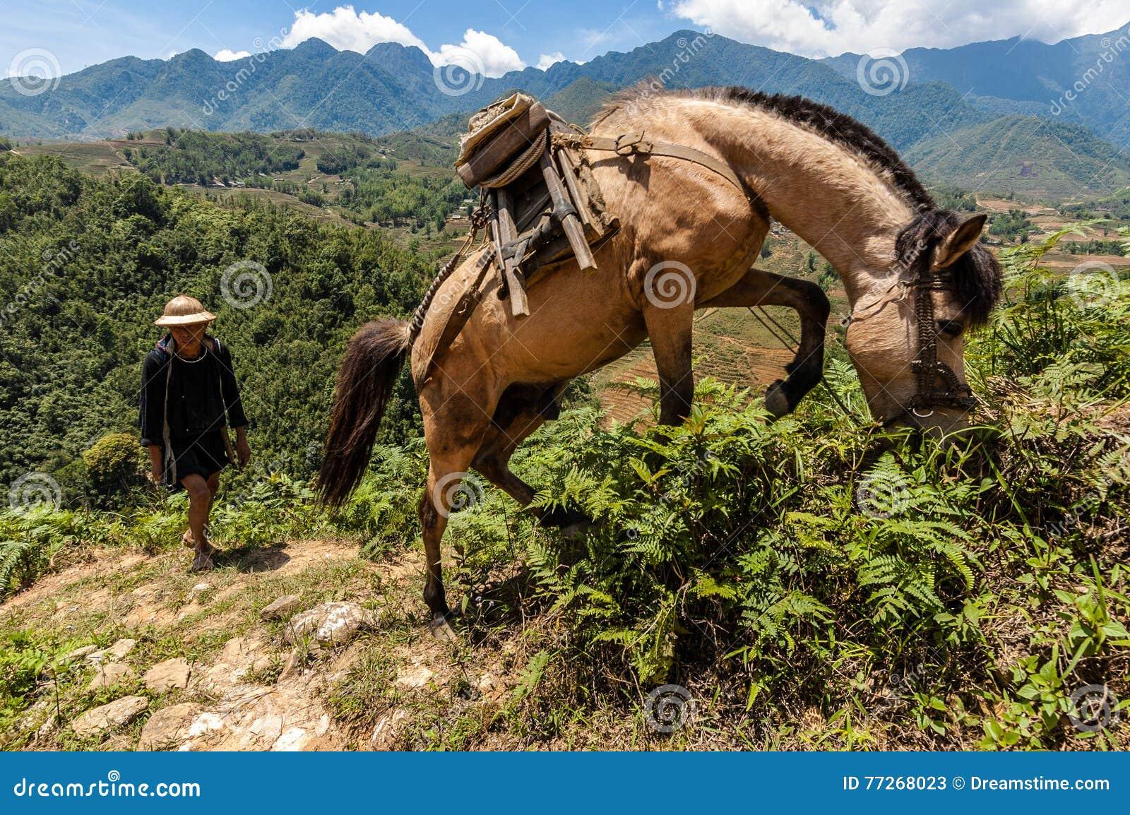 Wrangler и его лошадь, на горной тропе в Sapa, Lao Cai, Вьетнам