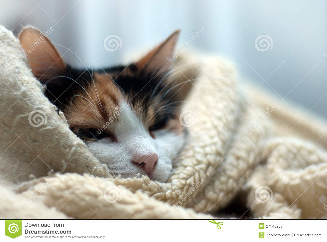 Wrapped Up Cat Stock Photos Image 27145263